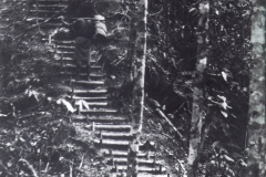 Golden-Stairs-New-Guinea