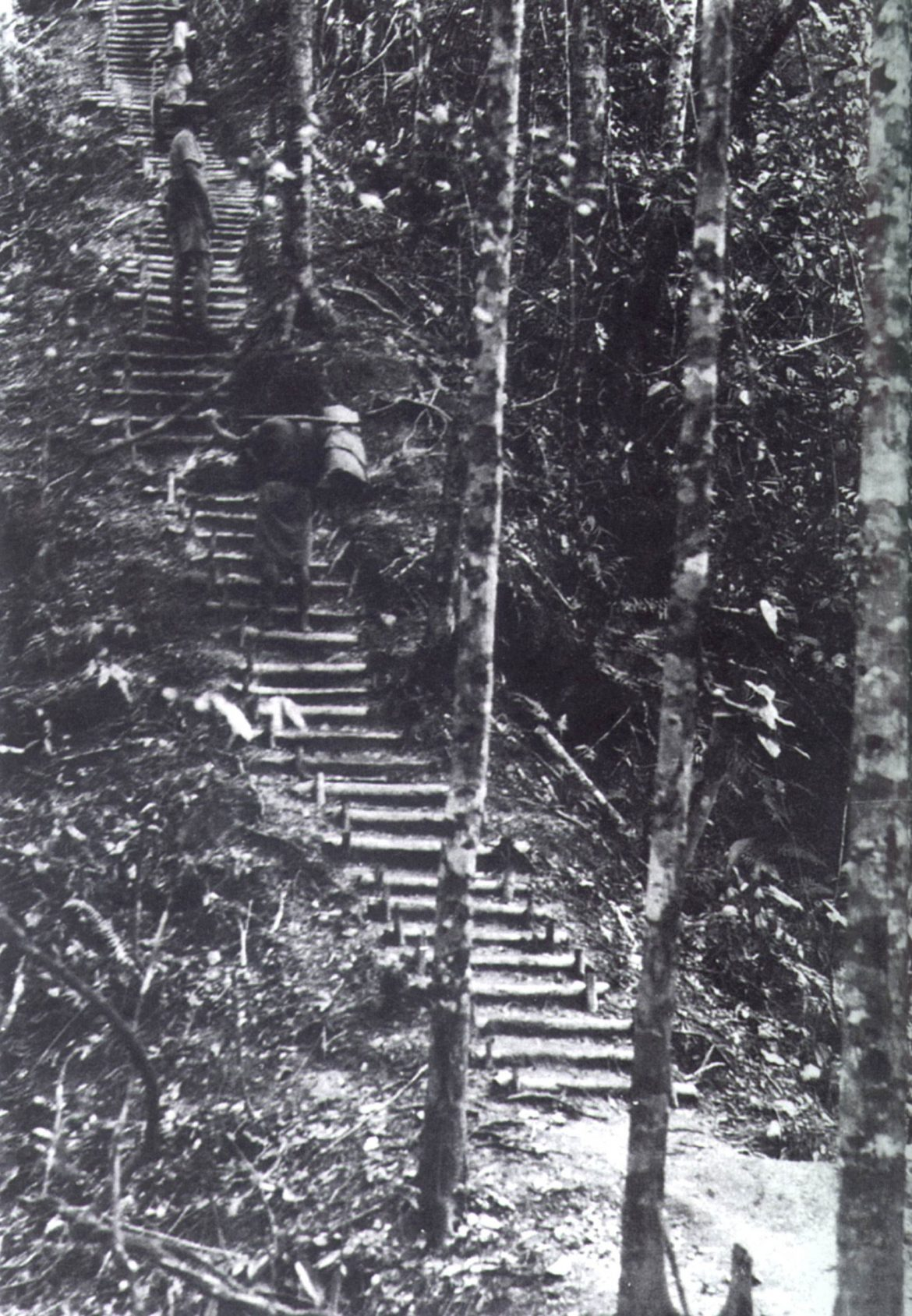 Golden-Stairs-New-Guinea.jpg
